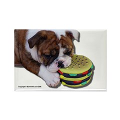 Bulldog Puppy Rectangle Magnet
