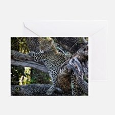 Leopard Cub Greeting Cards (Pk of 20)