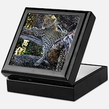 Leopard Cub Keepsake Box