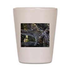 Leopard Cub Shot Glass