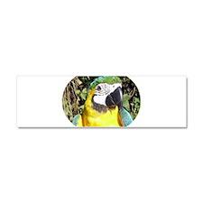 Macaw Car Magnet 10 x 3