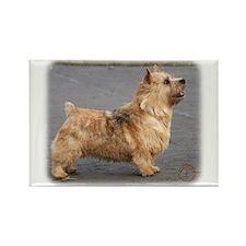 Norwich Terrier 9Y432D-004 Rectangle Magnet