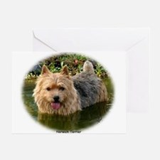 Norwich Terrier 9Y235D-087 Greeting Card