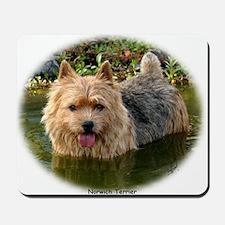 Norwich Terrier 9Y235D-087 Mousepad