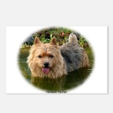 Norwich Terrier 9Y235D-087 Postcards (Package of 8