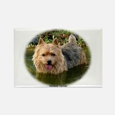 Norwich Terrier 9Y235D-087 Rectangle Magnet