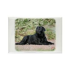 Labrador Retriever 9Y262D-047 Rectangle Magnet