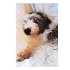 Sleepy Old English Sheepdog Postcards (Package of