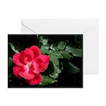 Wild Rose Greeting Cards (Pk of 10)