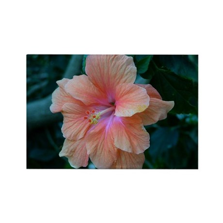 Peach Colored Hibiscus - Rectangle Magnet