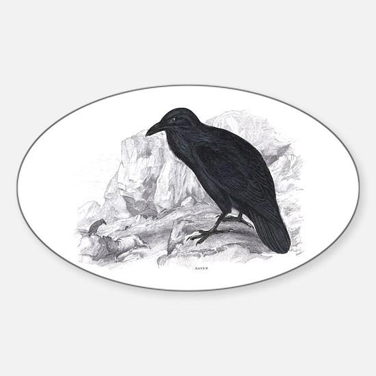 Black Raven Bird Oval Decal