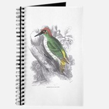Green Woodpecker Bird Journal