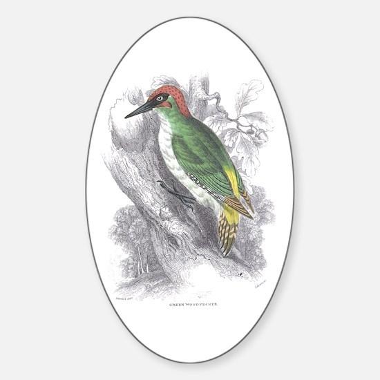 Green Woodpecker Bird Oval Decal
