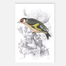 Goldfinch Bird Postcards (Package of 8)