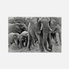 Elephants Rectangle Magnet (10 pack)