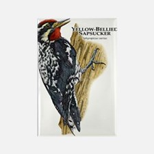 Yellow-Bellied Sapsucker Rectangle Magnet