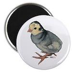 """Turkey Poult Blue Slate 2.25"""" Magnet (10 pack"""
