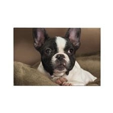 FRENCHIE PUPPY Rectangle Magnet (10 pack)