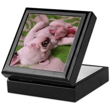PINK FRENCHIE PUPPY Keepsake Box