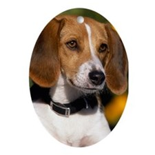 AMERICAN FOXHOUND Ornament (Oval)