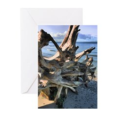 Driftwood Greeting Cards (Pk of 10)