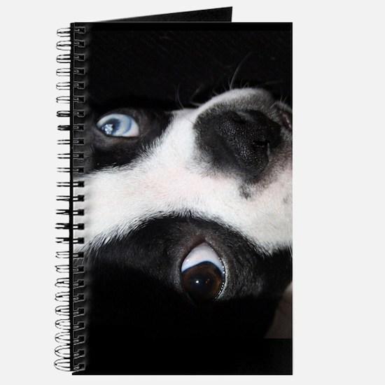 BLUE EYED BOSTON TERRIER Journal