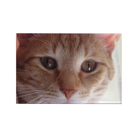 Mr. Munchkin Face Rectangle Magnet (100 pack)
