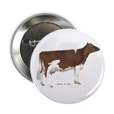 "Red and White Holstein cow 2.25"" Button"