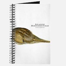 Atlantic Horseshoe Crab Journal