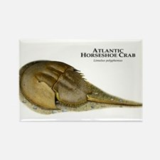 Atlantic Horseshoe Crab Rectangle Magnet