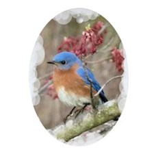 Eastern Bluebird Ornament (Oval)