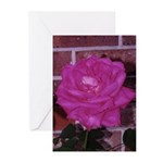 Magenta Rose Greeting Cards (Pk of 10)