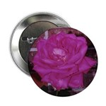 Magenta Rose Button
