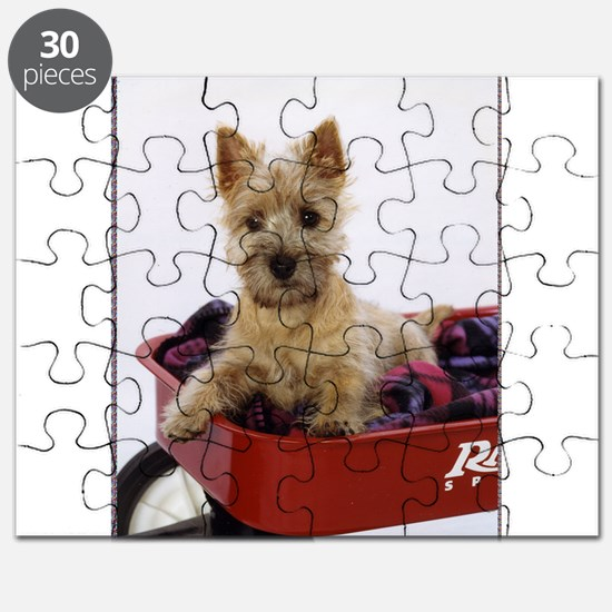 Baby Cairn Terrier Puzzle