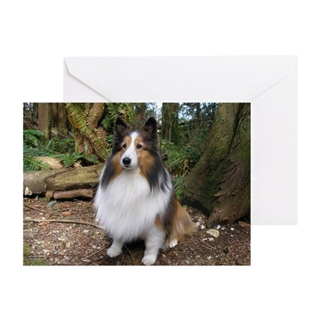 Sheltie Farm and Forest Calen Greeting Cards (Pk o