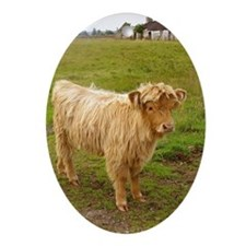 Heilan Coo (Highland cow) Ornament (Oval)