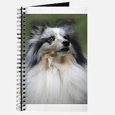 Funny Blue merle sheltie Journal