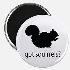 "Got squirrels? 2.25"" Magnet (100 pack)"
