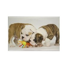 BULLDOG PUPPIES PLAYING Rectangle Magnet (100 pack