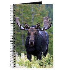 Bull moose Journal