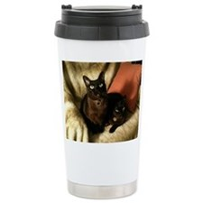 2 Brown Burmese on chair - Travel Mug