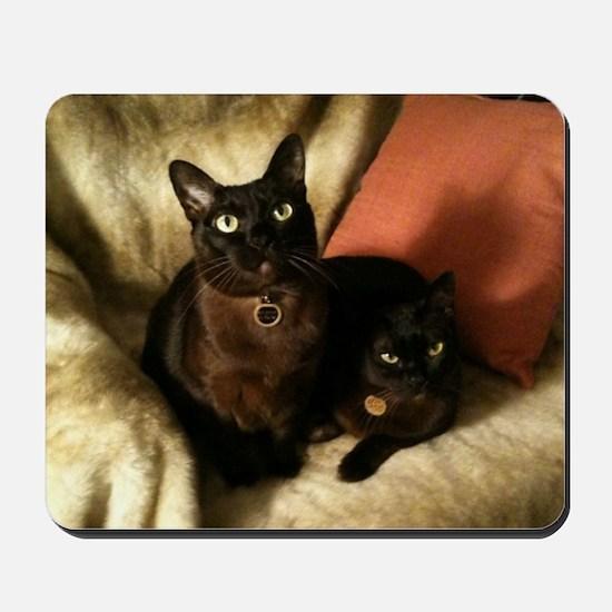 Burmese Cats on chair - Mousepad