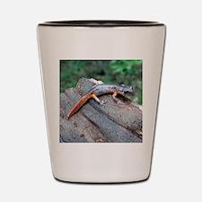 Ensatina Salamander Shot Glass