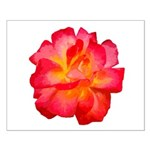Red Hot Rose Small Poster 16x20