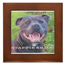 Cute Staffie dog Framed Tile