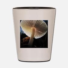 Mushroom Gills Backlit Shot Glass