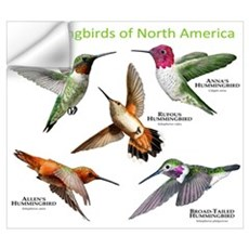 Hummingbirds of North America Wall Decal