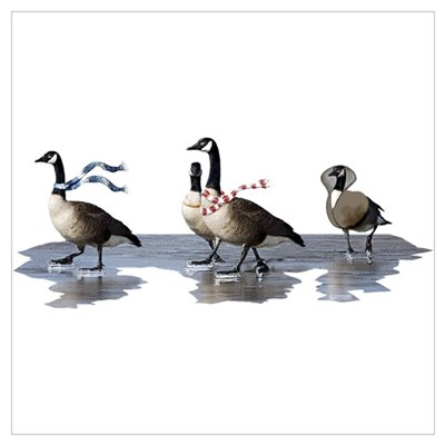 Cool Geese Poster