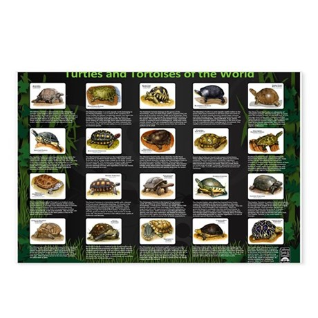 Turtles and Tortoises of the Postcards (Package of