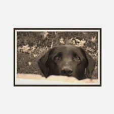 Black Labrador Rectangle Magnet